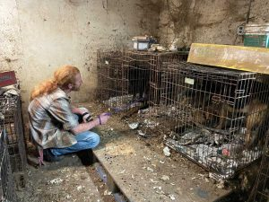 Bethel Neglect Case Dogs in Crates