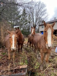 Bethel Neglect Case Horses at Home