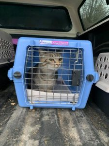 Bethel Neglect Case Cat in Carrier