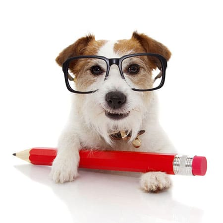Dog Wearing Glasses with Pencil