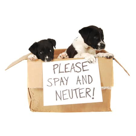 Cincinnati Area Spay Neuter Resources