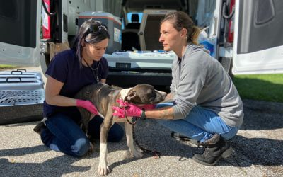 Clermont Animal CARE Has Concerns After County Takes Back Shelter Operations