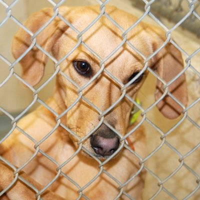 Sponsor a Kennel at the Clermont County Animal Shelter