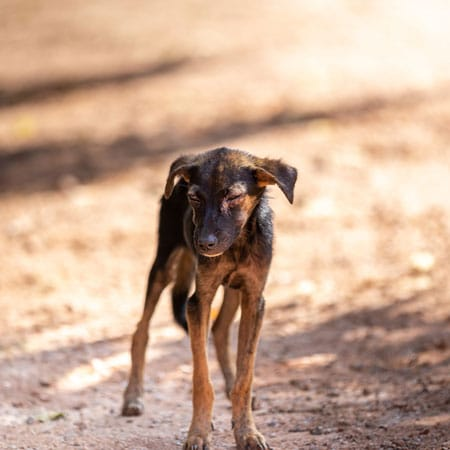 What to do When Finding a Stray Pet in Clermont County, Ohio