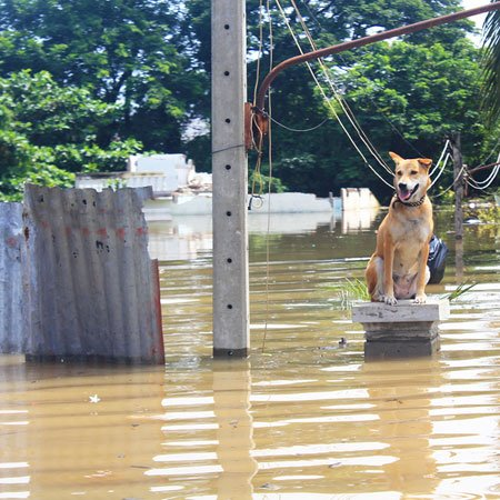 Preparing Your Pet for a Natural Disaster