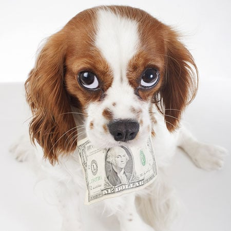Dog with Cash in Mouth