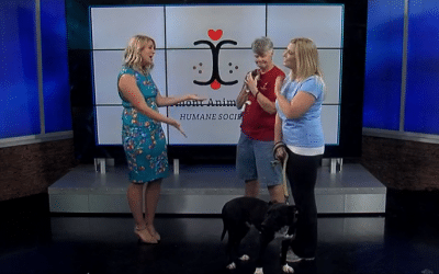 Clermont Animal CARE Takes to the Air Waves